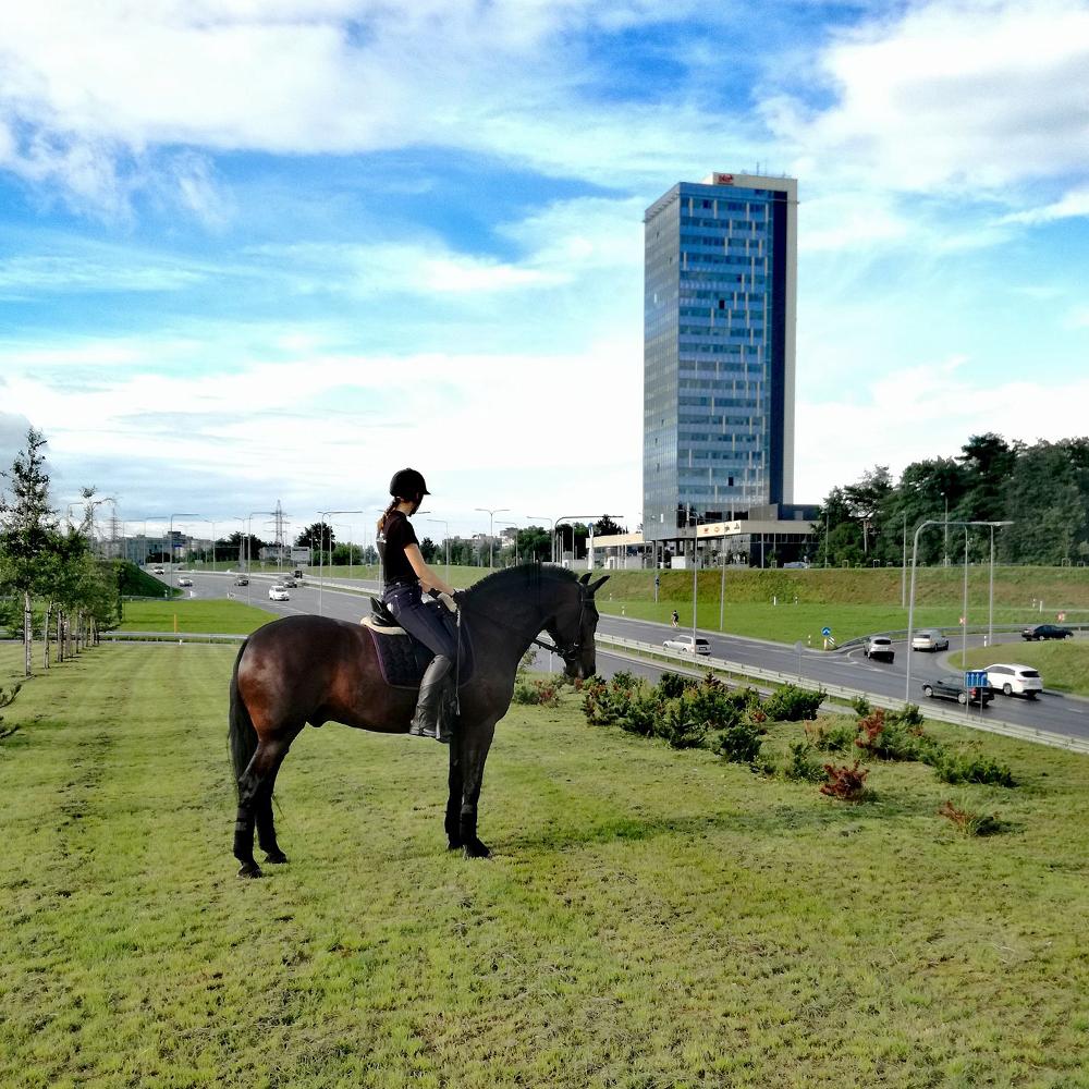 Jojimas Vilniuje